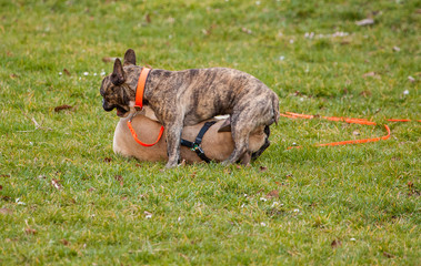 Spielhunde