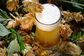 birra artigianale e luppolo