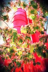 City Flowers, Nice, France