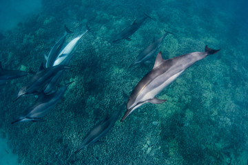Spinner Dolphins 1