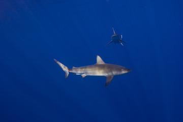 Sand Bar Sharks 1
