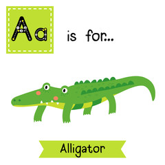 A letter tracing. Alligator. Cute children zoo alphabet flash card. Funny cartoon animal. Kids abc education. Learning English vocabulary. Vector illustration.