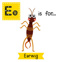 E letter tracing. Earwig standing on two legs. Cute children zoo alphabet flash card. Funny cartoon animal. Kids abc education. Learning English vocabulary. Vector illustration.