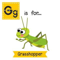 G letter tracing. Happy Grasshopper. Cute children zoo alphabet flash card. Funny cartoon animal. Kids abc education. Learning English vocabulary. Vector illustration.