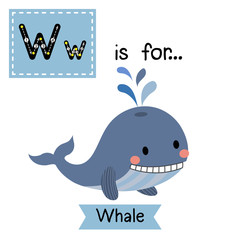 W letter tracing. Blue Whale with water splash. Cute children zoo alphabet flash card. Funny cartoon animal. Kids abc education. Learning English vocabulary. Vector illustration.