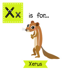 X letter tracing. Xerus. Cute children zoo alphabet flash card. Funny cartoon animal. Kids abc education. Learning English vocabulary. Vector illustration.