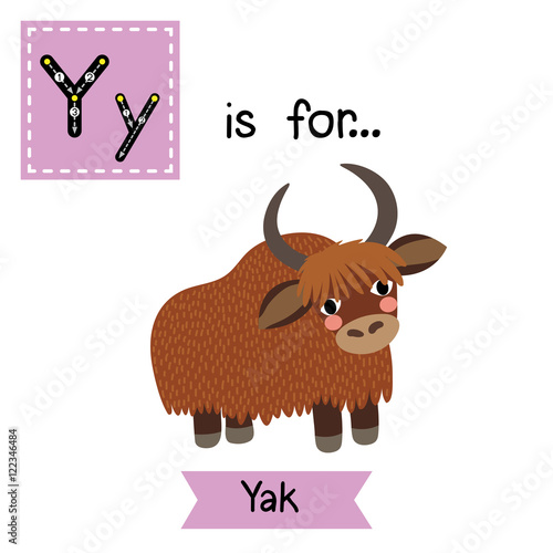 Y Letter Tracing Yak Cute Children Zoo Alphabet Flash Card Funny Cartoon Animal Kids Abc Education Learning English Vocabulary Vector Ilration