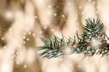 Christmas concept. Spruce branches on a golden background with sparkles and stars. Holidays.