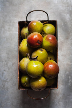 Miniature Seckel pears in a tin basket, gray background