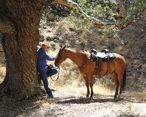 A cowboy and horse on a trail ride are taking a break under the shade of an oak tree.