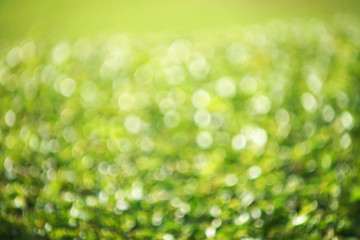 natural green blurred background with bokeh effect