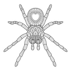 Hand draw of spider in Zentangle style. vector illustration.