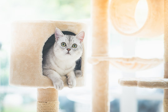 cat looking up on cat tower