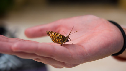 Close up of a butterfly sitting on a womans hand