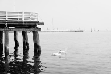 Swans floating by the pier in Sopot, Poland