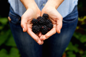 Woman holding bunch of delicious blackberries