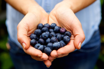 Handful of fresh blueberries