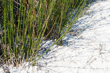 Green grass on the white sand.