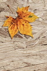 Dray Maple Leaf On Grunge Wooden Chipboard Background