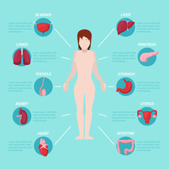 Human Body Anatomy Medical Scheme with Internal Organs. Vector illustration