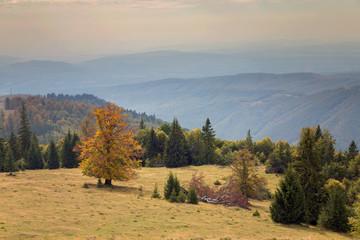Autumn landscape in the Carpathian Mountains