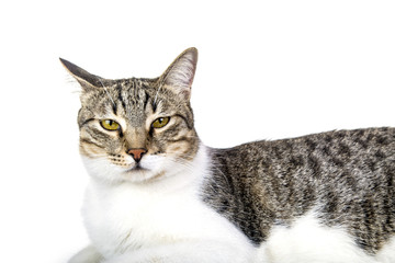 stray cat is sitting against isolated white background