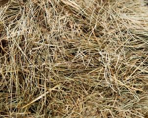 Texture. Dry hay closeup, harvesting
