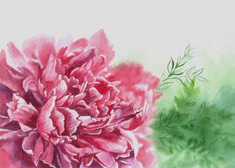 pink flower peony