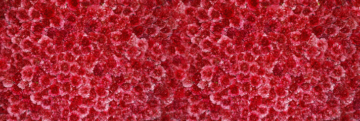 fondo panoramico de flores rojas