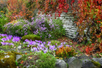 Flowerbed in autumn season. Colorful and vibrant plants growing near the stone fence. The flower garden is in the   garden of Palmse manor. Lahemaa national Park. Estonia. Autumn.