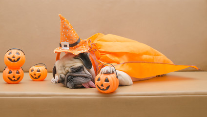 Cute pug dog with costume of happy halloween day sleep on sofa with plastic pumpkin Jack O'Lantern