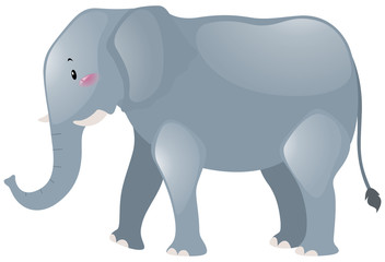 Big elephant with gray skin