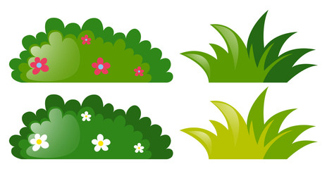 Four bushes with and without flowers