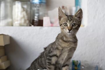 curious kitten staring to camera
