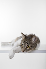 Cat lay down on white table