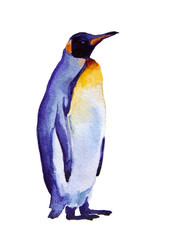 watercolor illustration Penguin