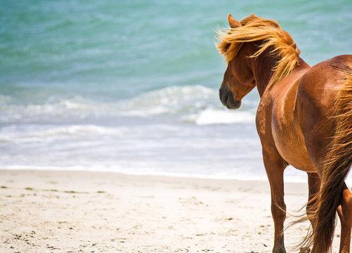 Wild horse on the beach