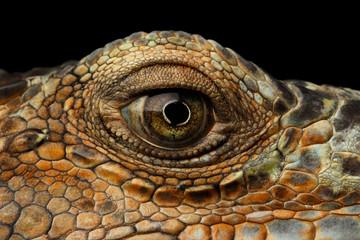 Closeup Eye of Green Iguana, Looks like a Dragon Isolated on Black Background Wall mural