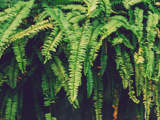 Fern plant and Green leaf in garden background