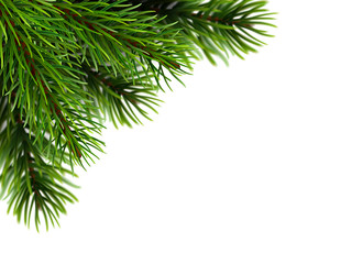 Super realistic fir branches. The background with the effect of unfocus. Vector illustration.