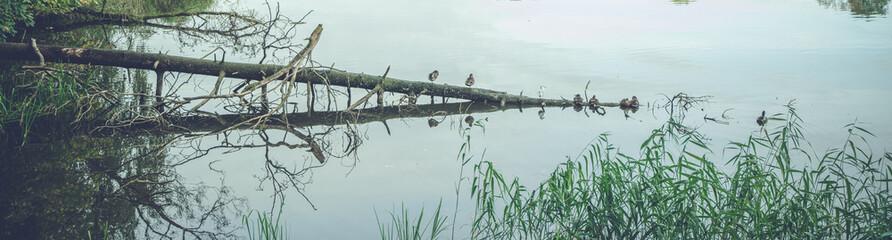 Birds on a row on a fallen tree