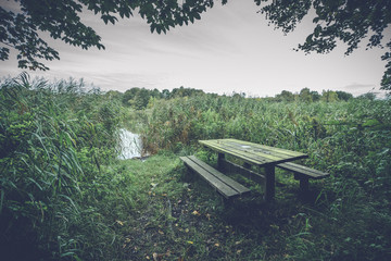 Empty bench surrounded by reeds