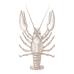 Lobster. Hand drawn sketch