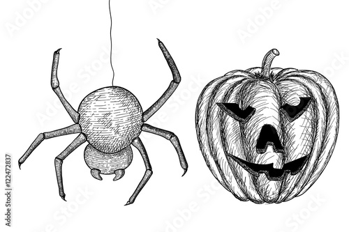 Quot halloween symbols spider and carved pumpkin hand drawn