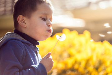 Cute child blowing dandelion at sunset