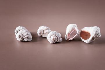 seashells lying randomly