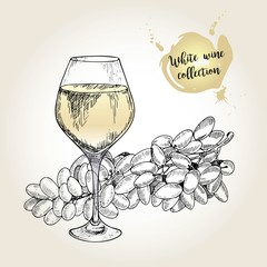 Vector set of white wine collection. Engraved vintage style. Glass and sultana grape. Isolated on grunge background.