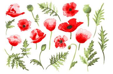 hand drawn poppies set
