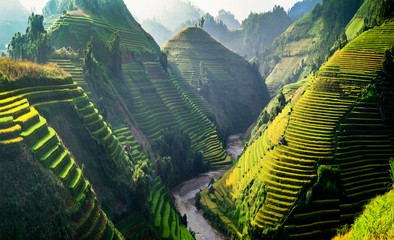 Foto auf AluDibond Reisfelder Rice fields on terraced in Northwest of Vietnam.