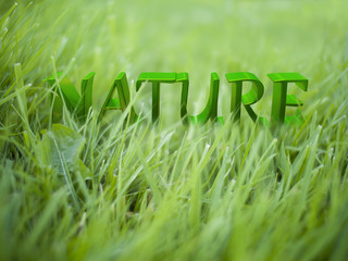 3D rendering of Nature words on green grass ground
